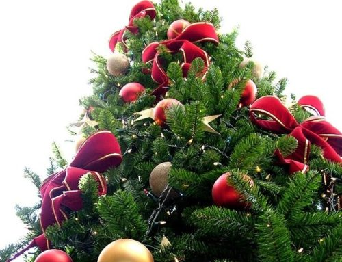 The origins of Christmas Tree